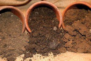 состав почвы для эухариса