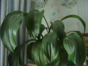 Можно ли стимулировать растение
