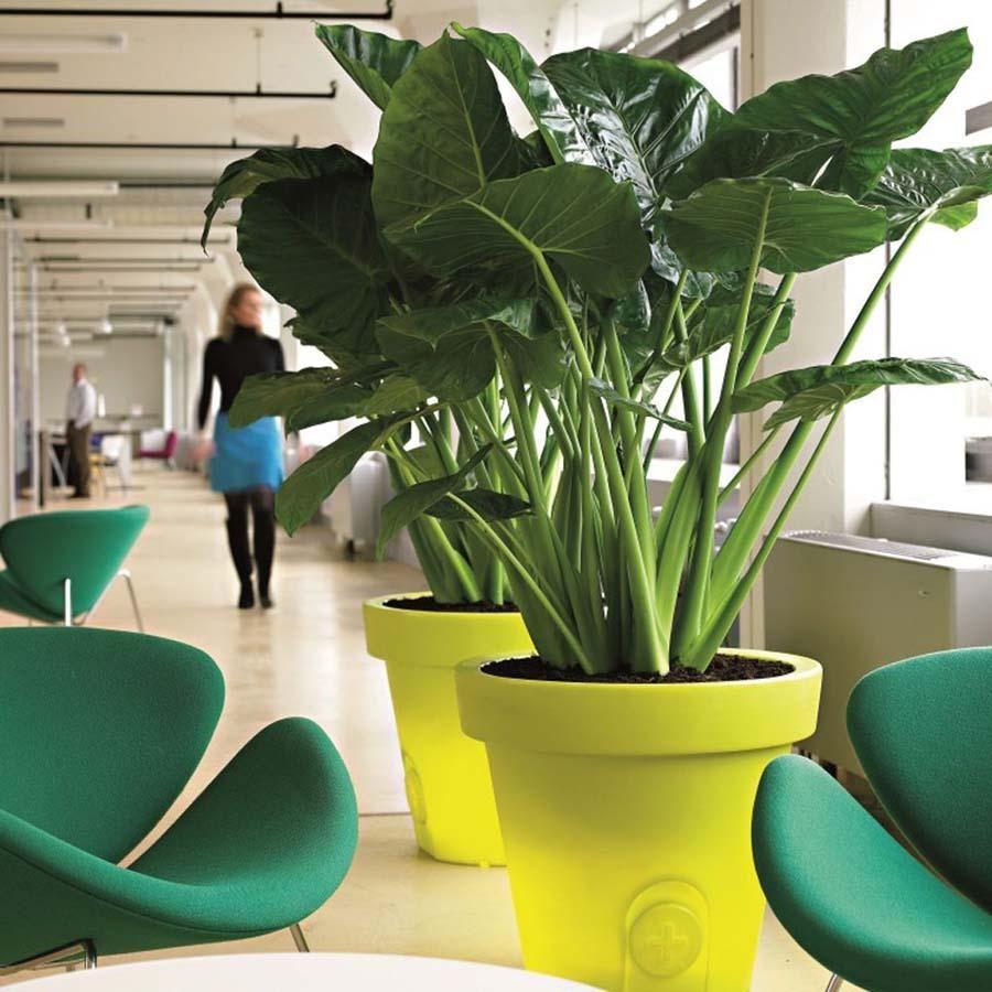 террариум большие офисные растения фото и названия вот наконец