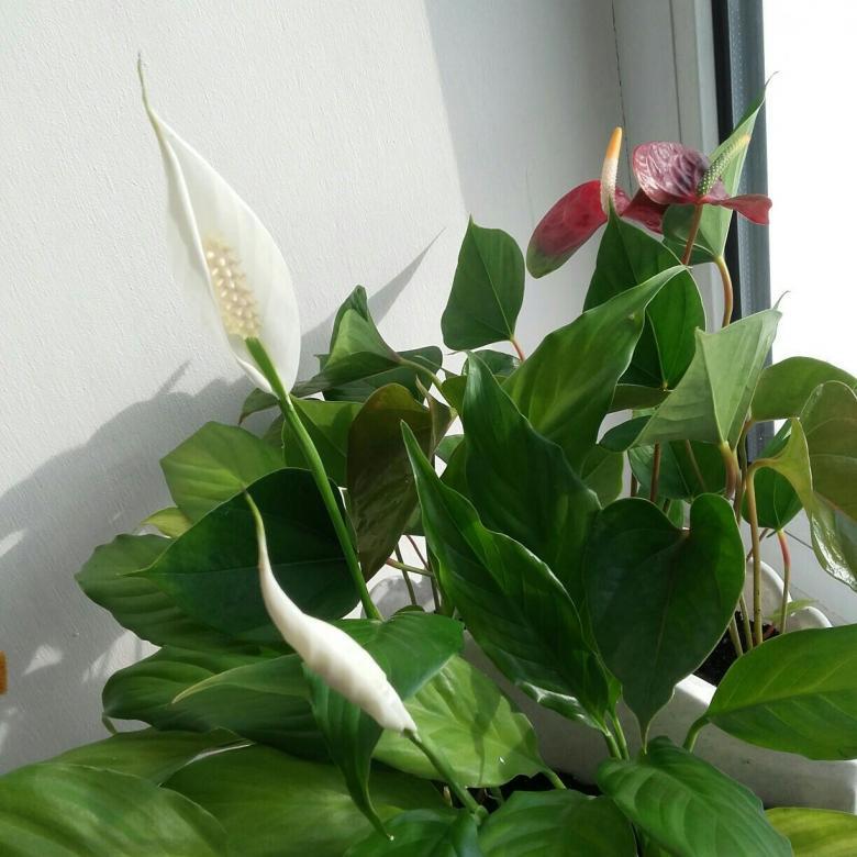 первые цветок женское и мужское счастье фото уздечки являются