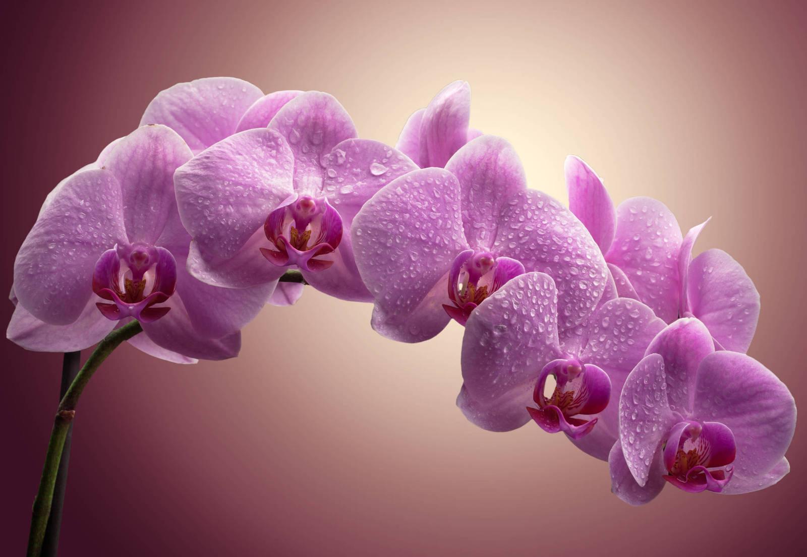 первой орхидеи фото в высоком разрешении нас